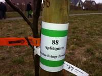 Wir pflanzen einen Baum …